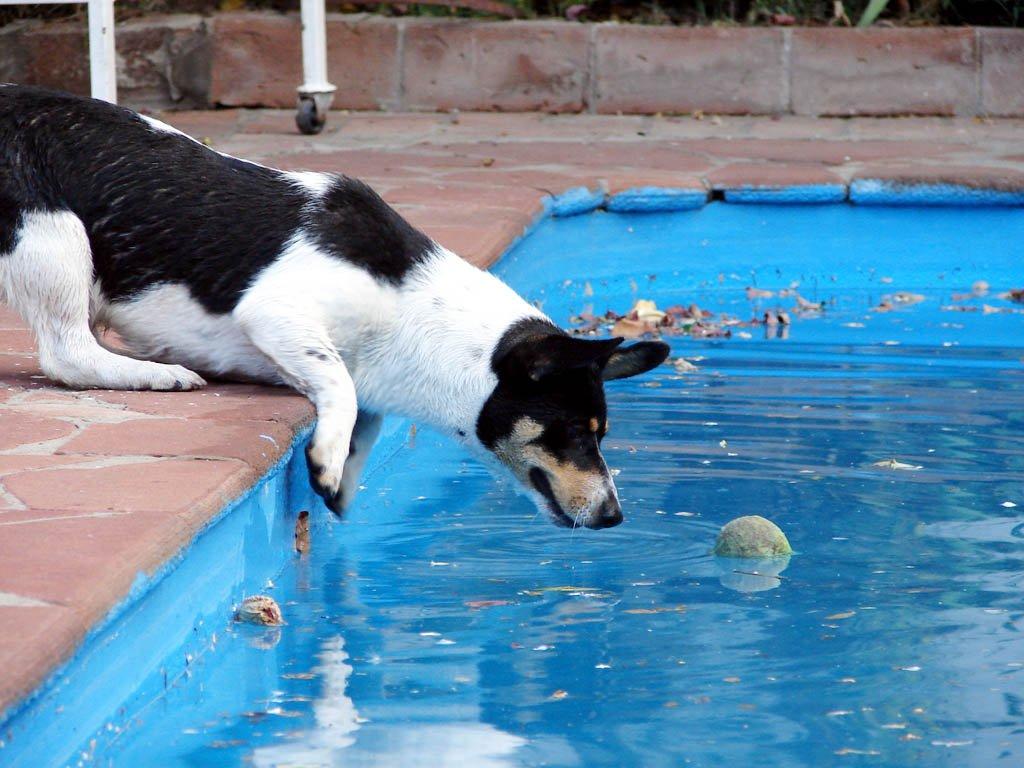 bazén pes