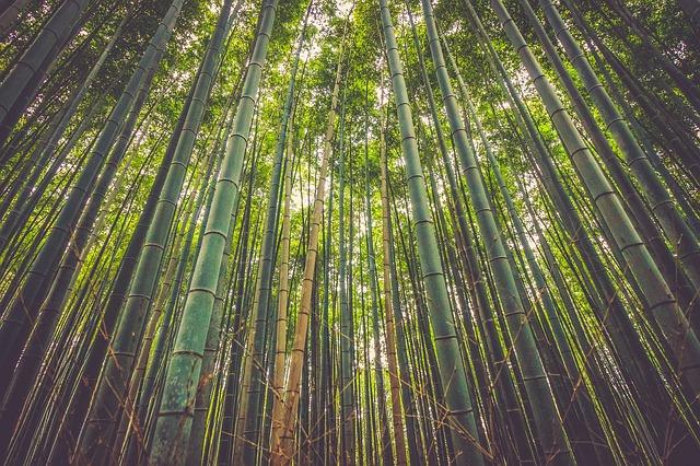 bambusový les.jpg