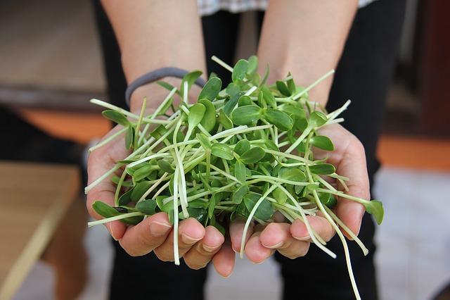 K bohaté úrodě křupavých klíčků vám stačí jen semena a biomiska!